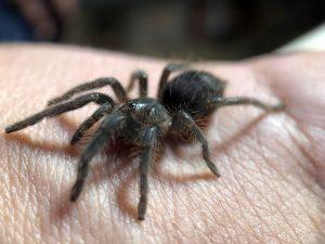Detangling spooky spider myths